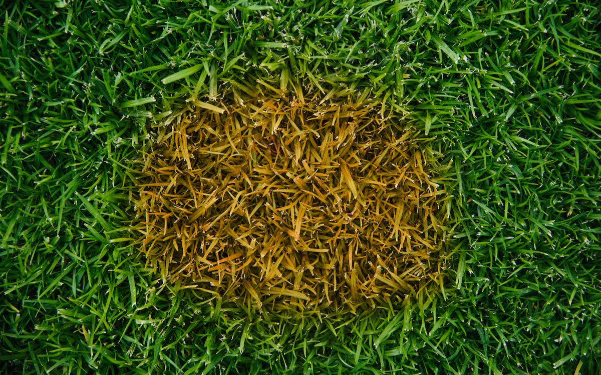 Causes Of Brown Patches On Your Lawn